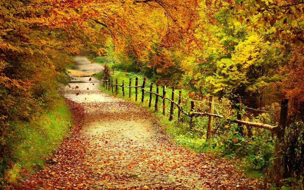 path-wallpaper-13084-13679-hd-wallpapers